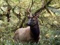 В США олень ворвался в магазин ковров