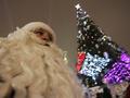 В Киеве начали устанавливать главную елку страны