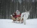 Ученые выяснили, почему у оленя Санта-Клауса красный нос