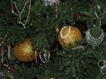 Киевская милиция за неделю конфисковала три тысячи елок