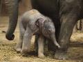 В зоопарке Ганновера родился слоненок