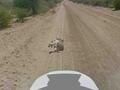 Шелдон Купер обвинил Google в убийстве осла в Ботсване