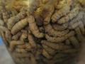 На британской таможне конфисковали 94 кг сушеных гусениц