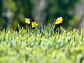 Трава у дома: киевские власти обещают восстановить 50 тысяч газонов