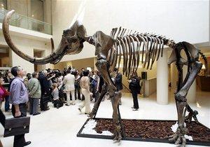 Новости науки - странные новости - новости германии: В Германии сотрудники музея во время уборки в подвале обнаружили двухсоттысячелетний скелет мамонта