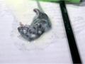 Жительница Луганской области заявила, что обнаружила в кефире дохлую мышь
