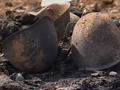 В Дагестане около мечети сработало взрывное устройство