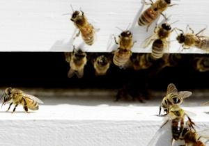 В США супружеская пара полгода жила в доме с десятками тысяч пчел