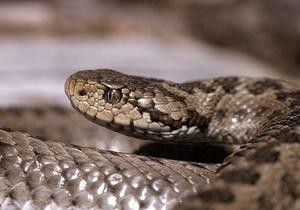 В Ивано-Франковской области змея укусила мужчину и ребенка
