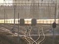 Укрзализныця назначила дополнительные поезда на 26 и 27 августа для выезда из Крыма