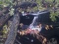 В Киеве на Парковой дороге дерево повредило сразу два автомобиля