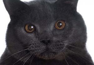 Стиль жизни - Русский заплатил 30 000 евро за некролог для кота
