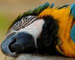 Впервые видел такого ненормального попугая