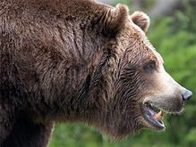 Хотя на фотке отчетливо виден клюв, а мне кажется, у медведов...
