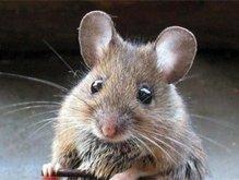 Животные могут обмениваться феромонами страха