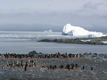 В 2008 году озоновая дыра над Антарктикой не достигнет гигантских размеров