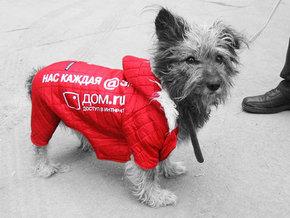 В Новосибирске рекламу разместят на собаках