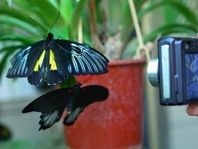 В Киев прилетели экзотические бабочки