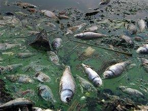 Массовая гибель рыбы по всей Земле.