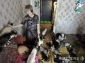 Кошкин дом под Киевом