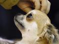 Зона повышенной лохматости. В Киеве прошла крупнейшая выставка собак
