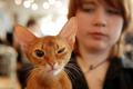 Кошек много не бывает. В Киеве прошла Международная  выставка породистых кошек