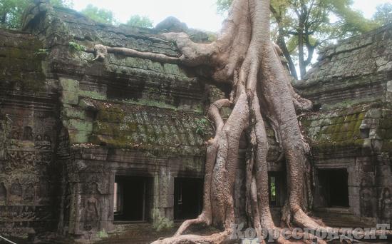 В ОБЪЯТИЯХ ДЖУНГЛЕЙ: Когда французские археологи открыли Ангкор, храмы были почти полностью поглощены джунглями. Та-Пром - единственный храм, где постарались сохранить эту атмосферу