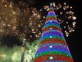 Мы начинаем Новый год. Янукович зажег главную елку Украины