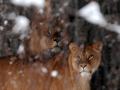 Звери на морозе. Зима в киевском зоопарке