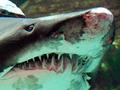 Рыбный день. Акция в защиту акулы в ТРЦ Ocean Plaza