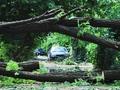 Шторм подкрался незаметно. Последствия урагана в Одессе