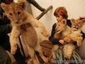 Львиная доля