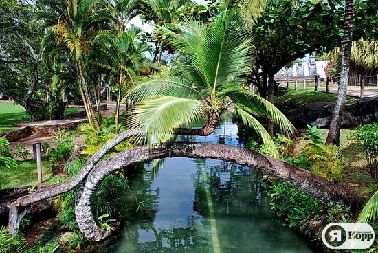 Полинезийский культурный центр, Гавайи